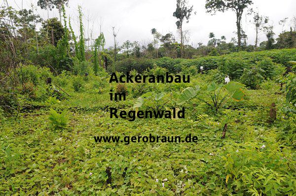 Ackeranbau im Regenwald